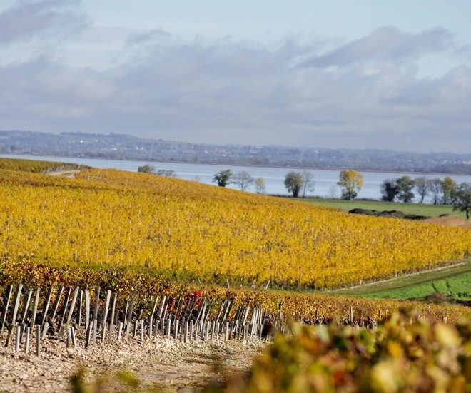 Overlooking the Gironde