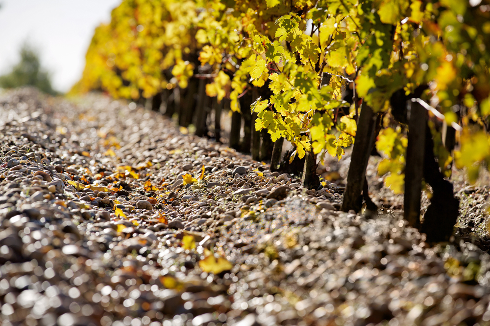 In the vineyard manager's footsteps