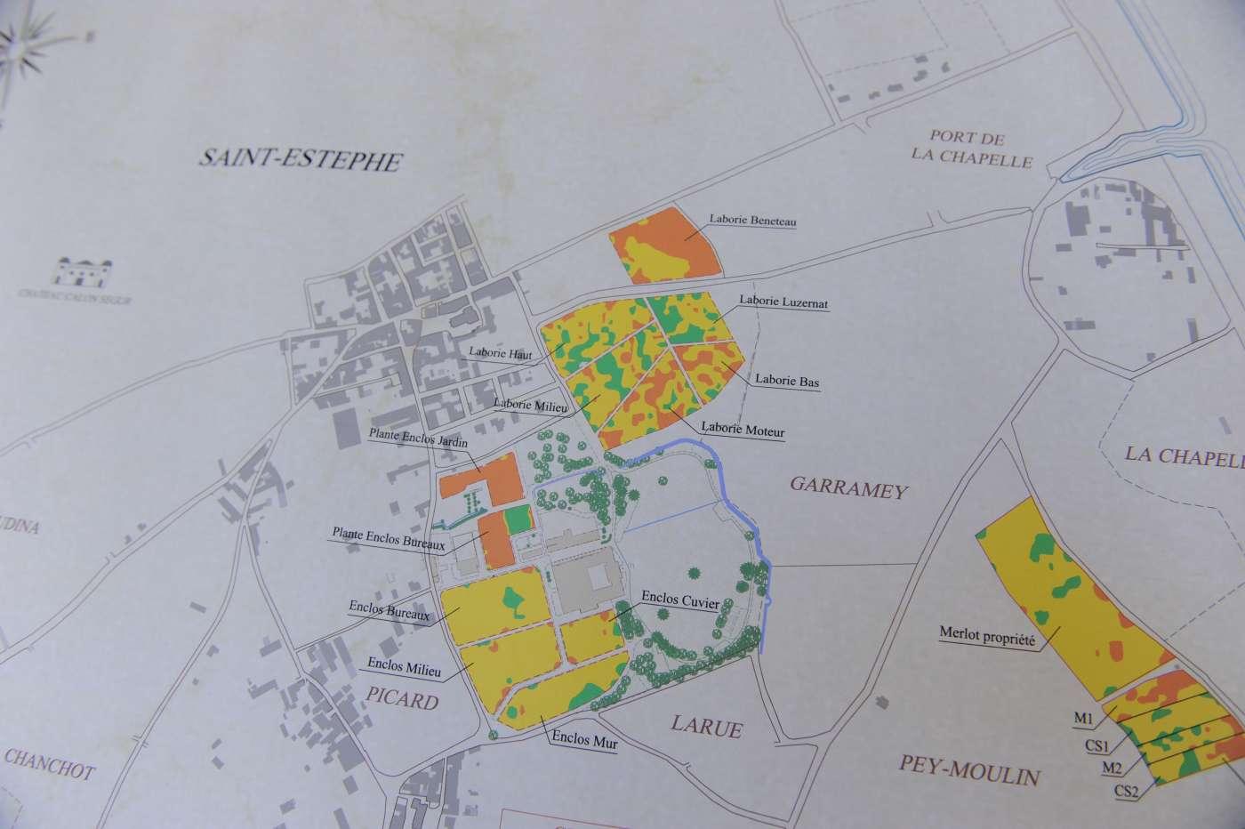 Saint Estèphe vineyard