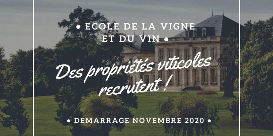 Château Phélan Ségur - École de la vigne