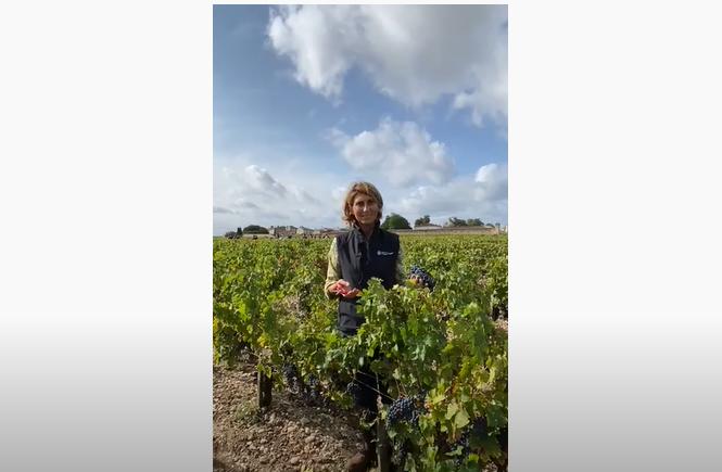 Château Phélan Ségur - Harvest 2020