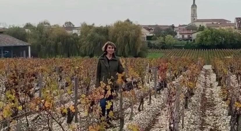 Château Phélan Ségur - Mi-novembre 2020